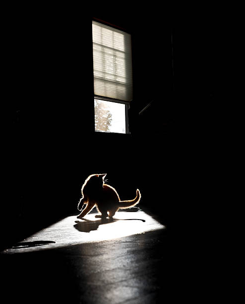 Kitten playing in a patch of sunlight in silhouette.