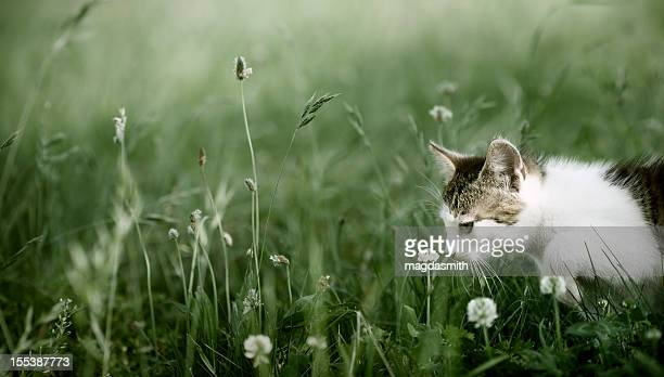 kitten playing in grass - magdasmith stock pictures, royalty-free photos & images