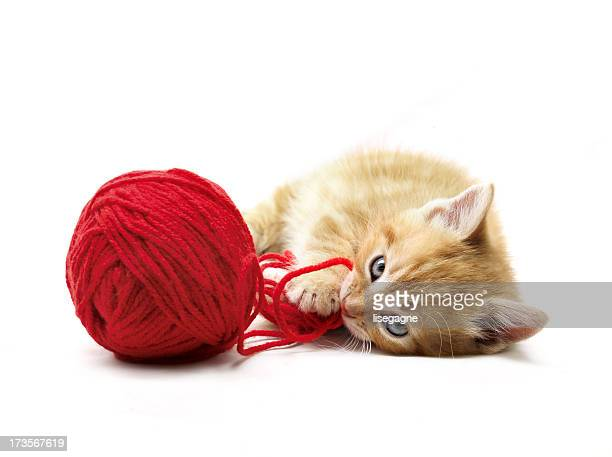 kitten playing - wool stock pictures, royalty-free photos & images