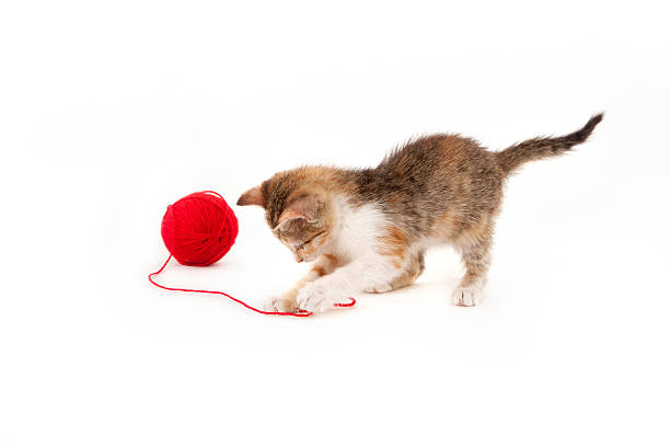 Kitten Playing With A Ball Of Red Wool Wall Art