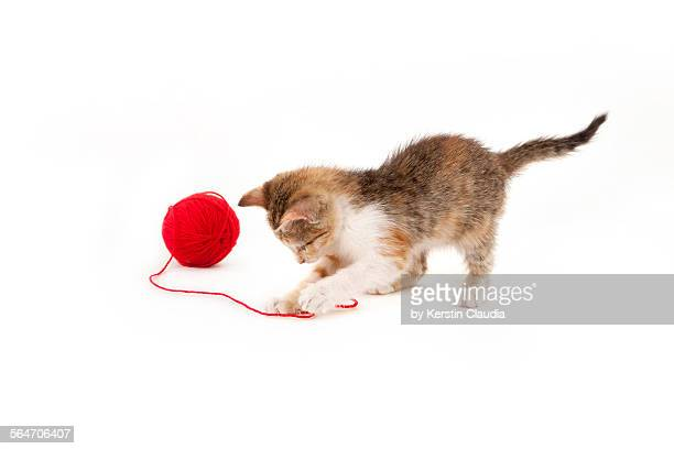 Kitten playing with a ball of red wool