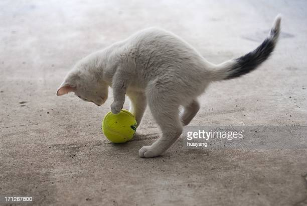 Kitten playing with a ball