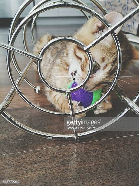 Kitten Playing With Ball In Metal Structure