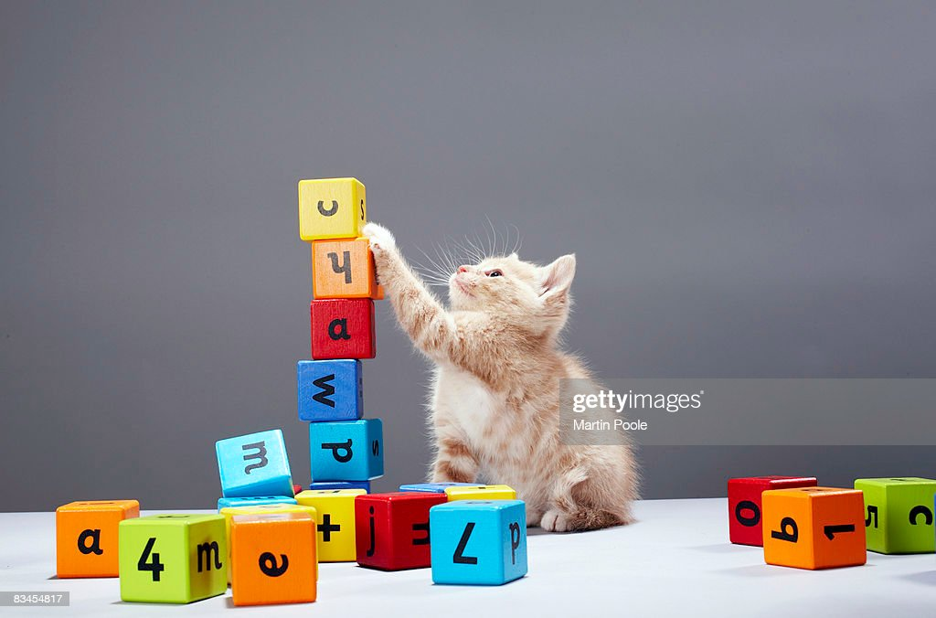 Kitten playing with building blocks : Stock Photo