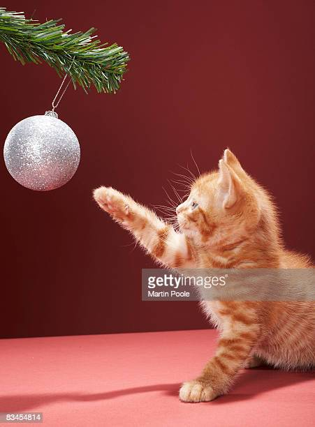 Kitten playing with Christmas bauble on tree