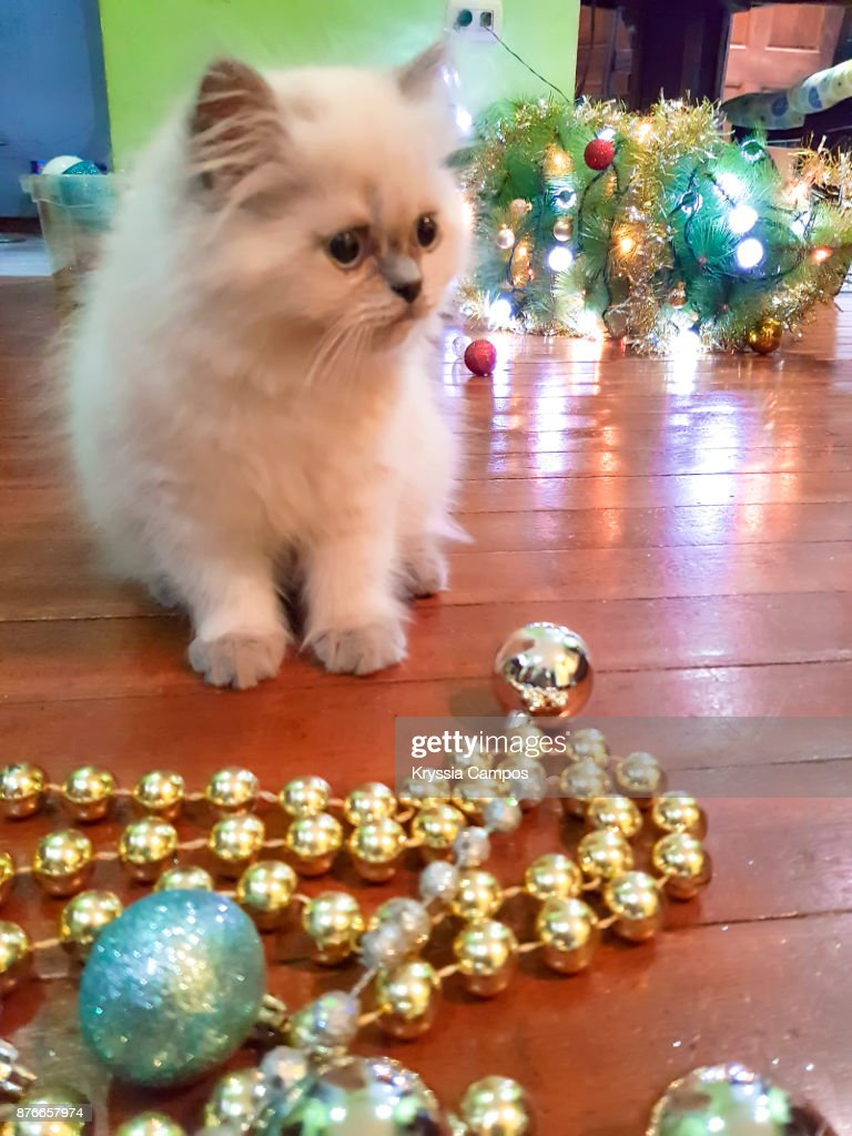 Kitten Playing With Christmas Tree Ornaments Stock Photo | Getty Images