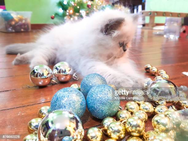 Kitten Playing with Christmas Tree Ornaments