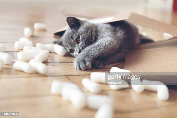 kitten playing with packing peanuts - cat family stock pictures, royalty-free photos & images
