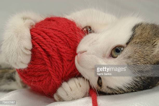 Kitten playing with red ball of yarn, close-up