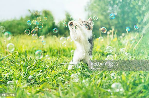 Little kitten playing with soap bubbles on summer meadow