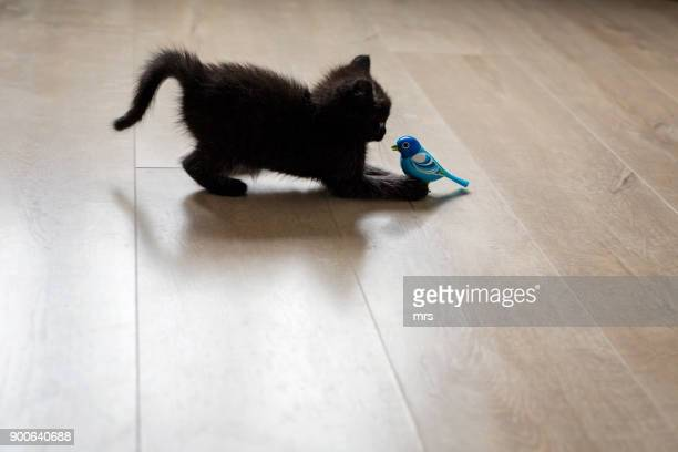 kitten playing with toy bird - gatto nero foto e immagini stock