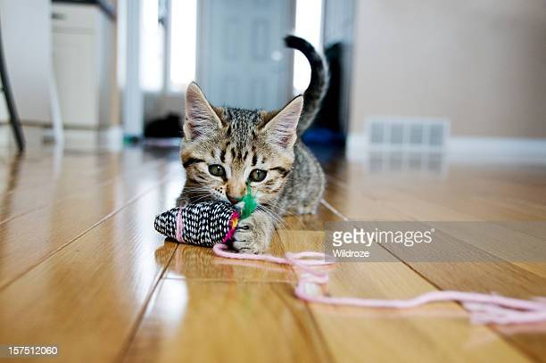 kitten plays with toy mouse - schattig stockfoto's en -beelden