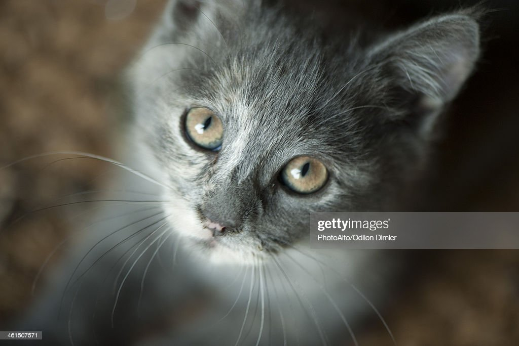 Kitten, portrait : Stock Photo