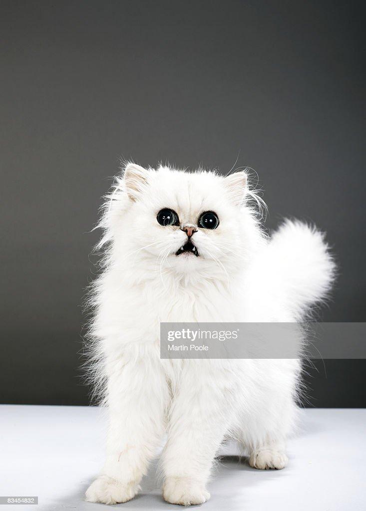 Kitten portrait : Stock Photo