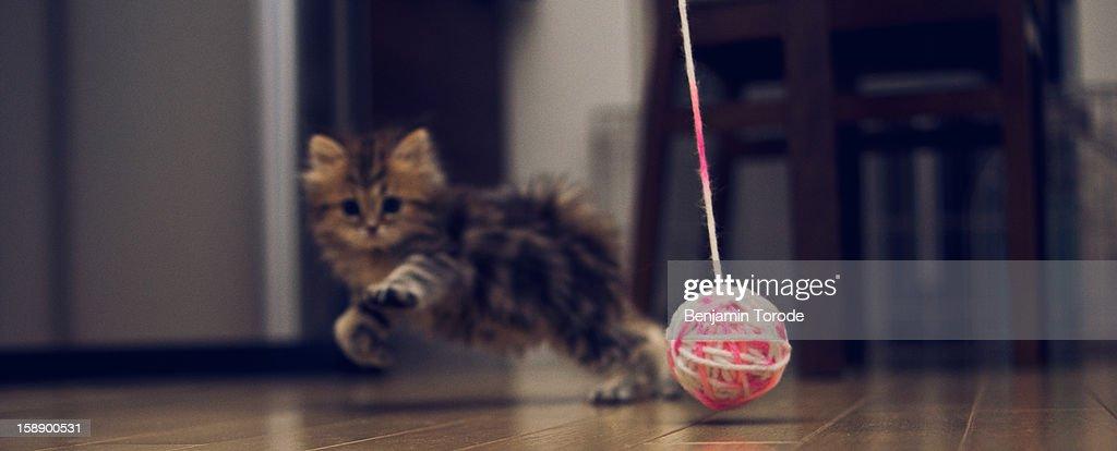 Kitten pursuing ball of wool : Stock Photo