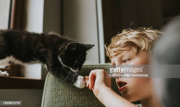 a kitten reaches out with its paw to touch a child's hand - animal body part stock pictures, royalty-free photos & images
