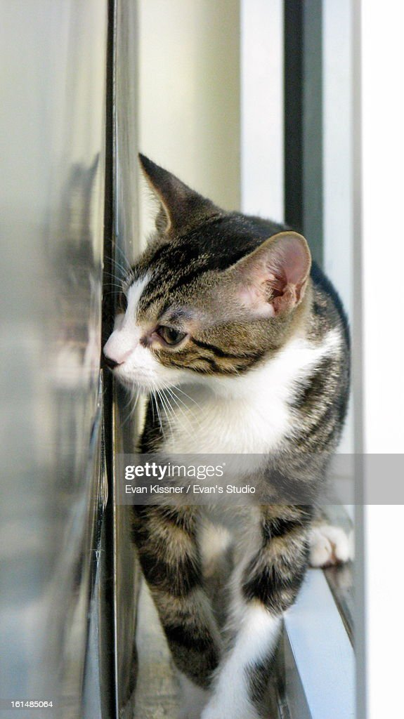Kitten Reflection. : Stock Photo