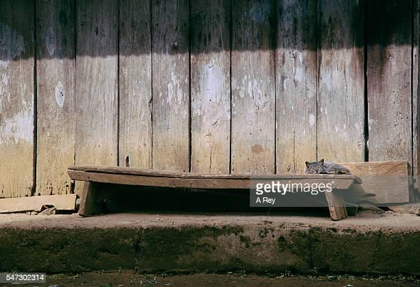 Kitten relaxing on a wooden bench