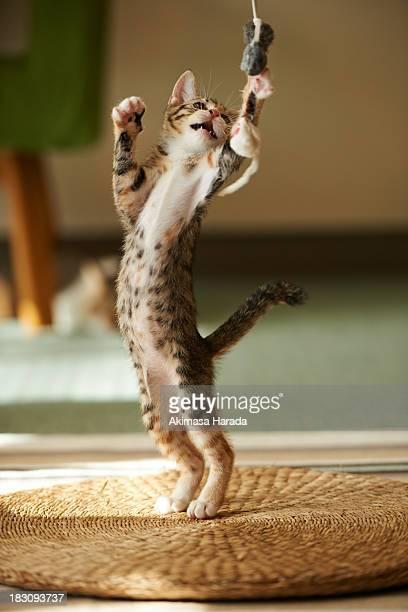 Kitten Rising