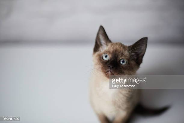 kitten sat down - cat family stock pictures, royalty-free photos & images