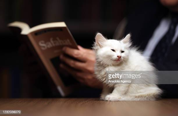 "Kitten sits nearby a library user as he reads a book at ""Kedili Tekke"" , used as a library at present in Bursa, Turkey on March 30, 2021. The library..."