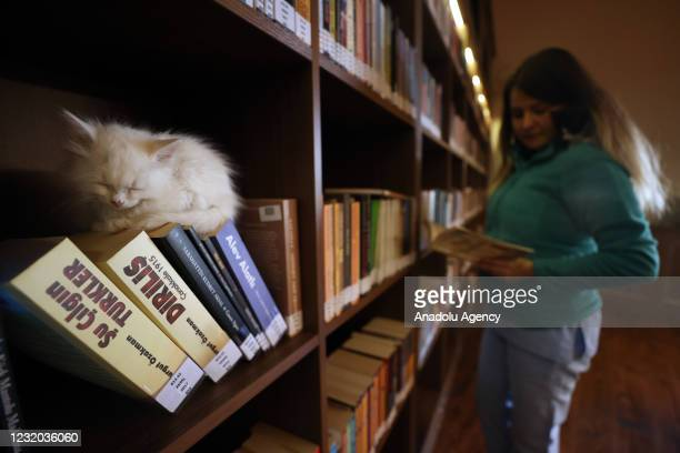 "Kitten sits on top of the books on a shelf as a library user reads a book at ""Kedili Tekke"" , used as a library at present in Bursa, Turkey on March..."