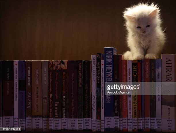 "Kitten sits on top of the books on a shelf at ""Kedili Tekke"" , used as a library at present in Bursa, Turkey on March 30, 2021. The library used to..."