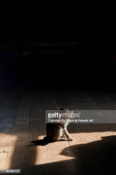 A kitten sits out of the shadow of window.
