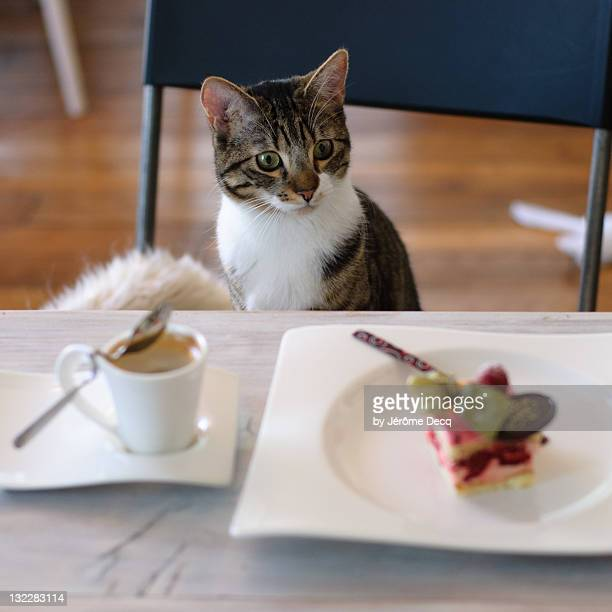 kitten sitting at table - vincennes stockfoto's en -beelden