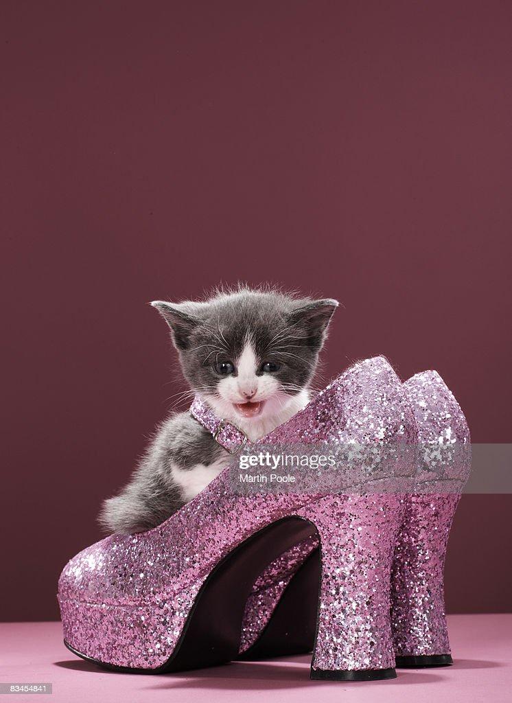 Kitten sitting in glitter shoes : Stock-Foto
