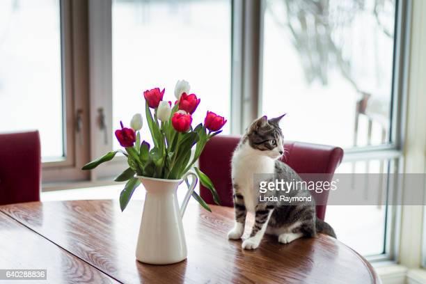 Kitten sitting on a kitchen table  beside a tulips bouquet