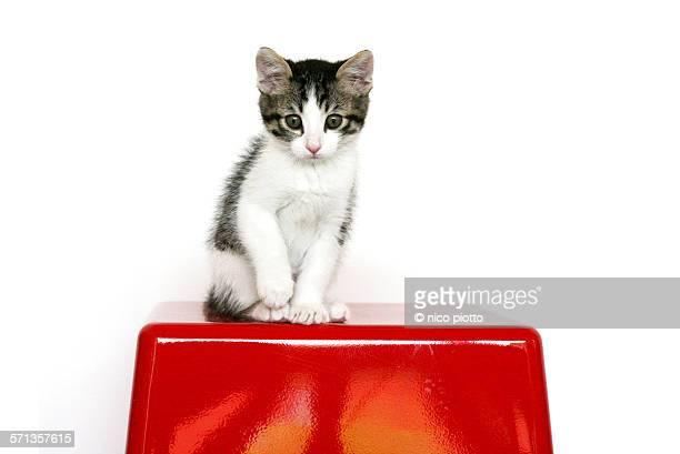 Kitten sitting on Red Box