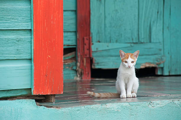 Kitten Sitting On The Porch Of A Colourful Home Wall Art