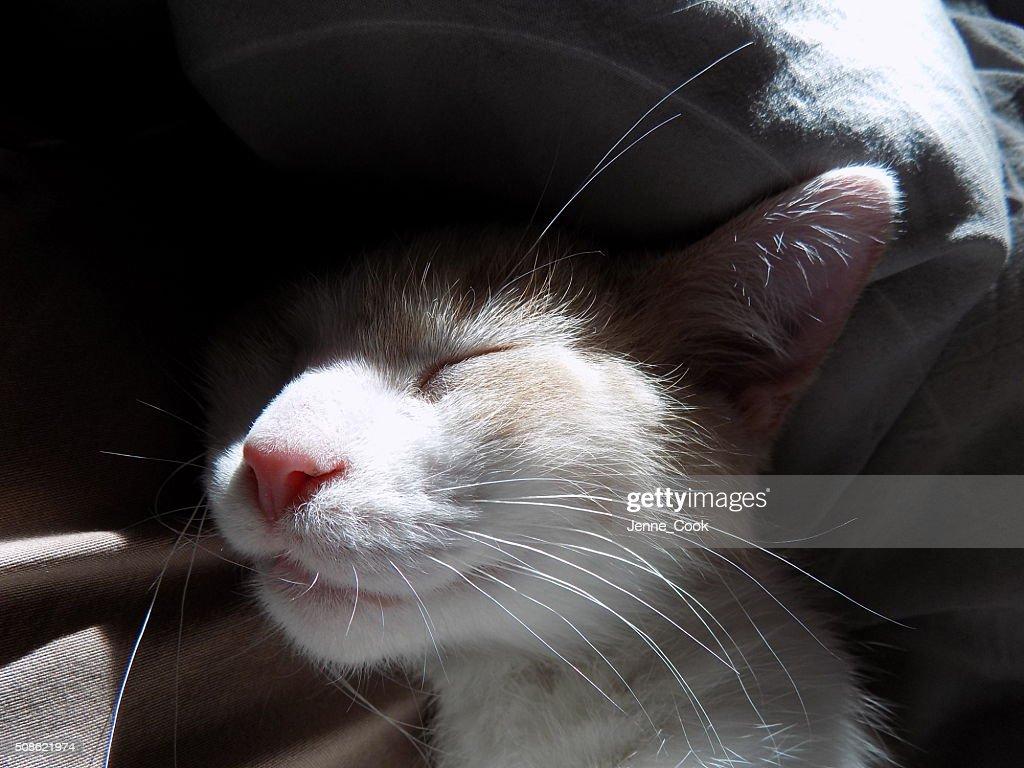 Kitten sleeping : Stock Photo
