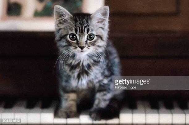 Kitten Standing on Piano Keys