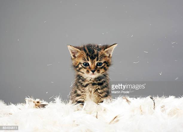 kitten surrounded by feathers - schattig stockfoto's en -beelden