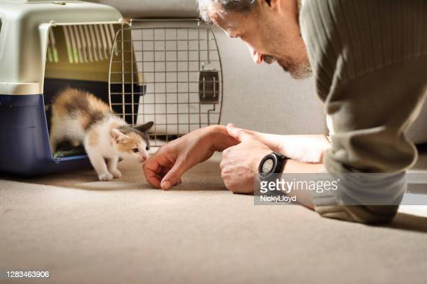 kitten taking his first steps into his new forever home - adoption stock pictures, royalty-free photos & images