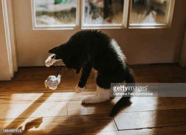 a kitten throws a balled up piece of paper into the air - animal behaviour stock pictures, royalty-free photos & images