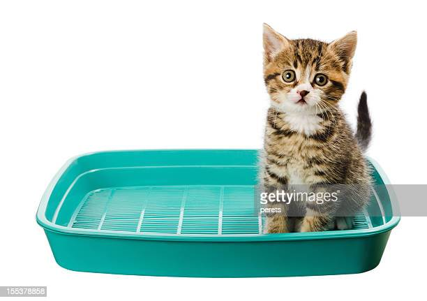kitten toilet - litter box stock photos and pictures