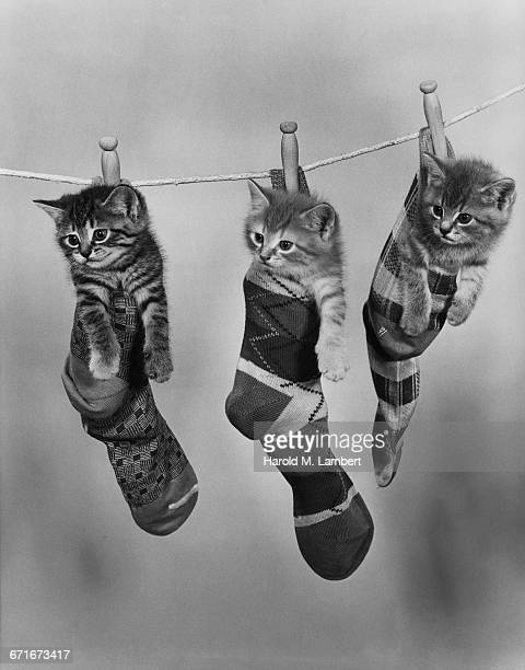 kitten under socks hanging on clothesline - funny cats stock pictures, royalty-free photos & images