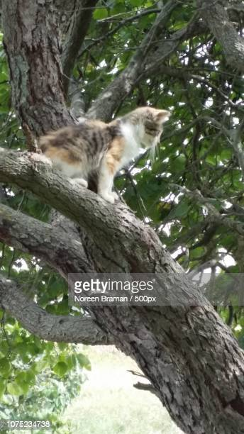 kitten up a tree - noreen braman stock pictures, royalty-free photos & images