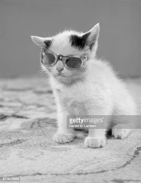 kitten wearing sunglasses - pawed mammal stock pictures, royalty-free photos & images