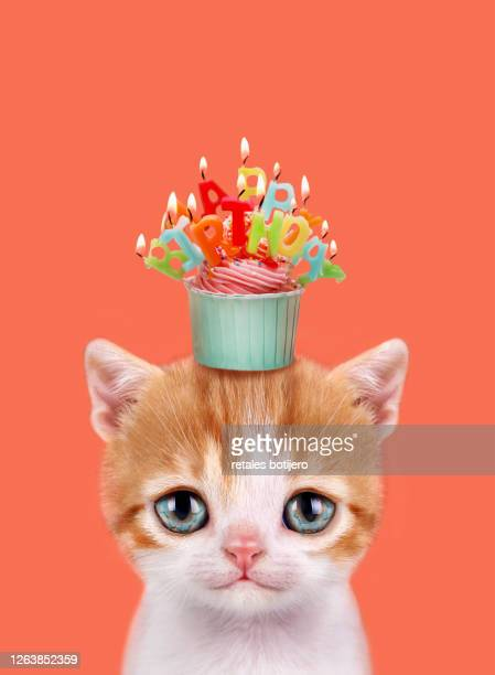 kitten with a birthday cupcake. - happy birthday cat stock pictures, royalty-free photos & images