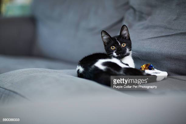 Kitten with Cat Toy on Couch Indoors