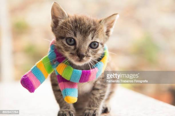 kitten with colorful scarf