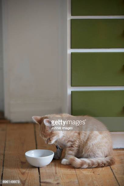 Kitten with empty bowl
