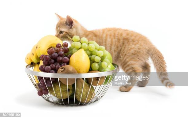 Kitten with Fruit Bowl