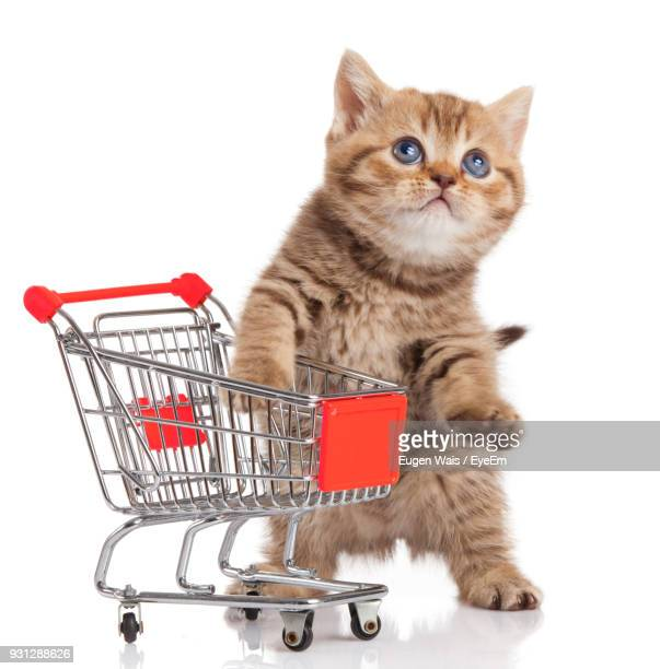 Kitten With Miniature Shopping Cart Against White Background