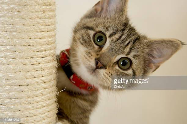 Kitten with red collar peeking out from a scratching post