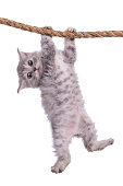 kitten with rope